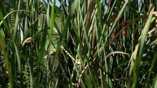 jeřáb idylické golfové hřiště s pár, který hraje golf a udeří do míče