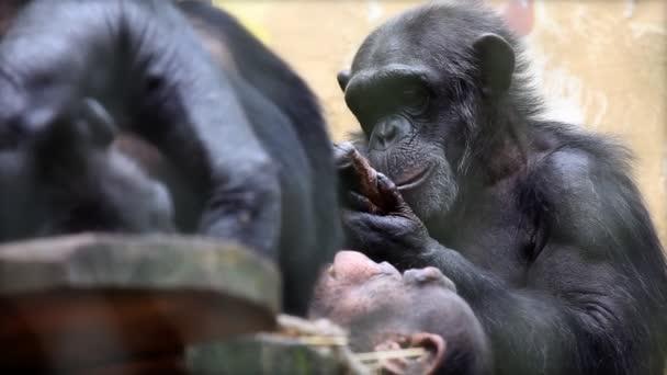 opice v zoo jíst