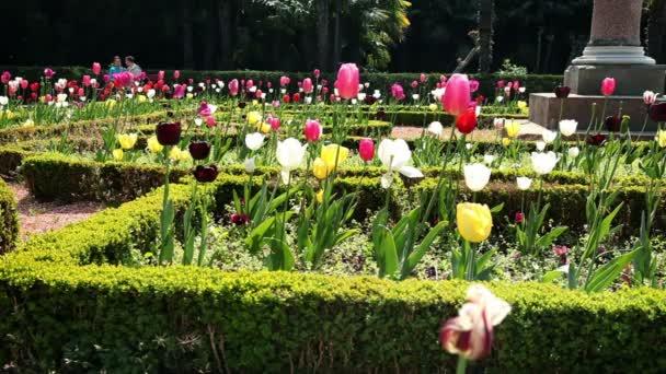 shot z květu tulipány