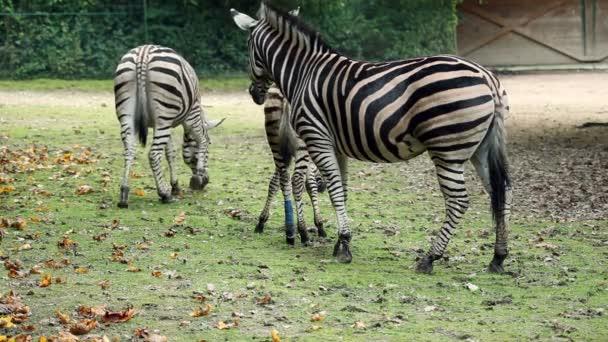 zebrák ljubljana állatkerti séta.