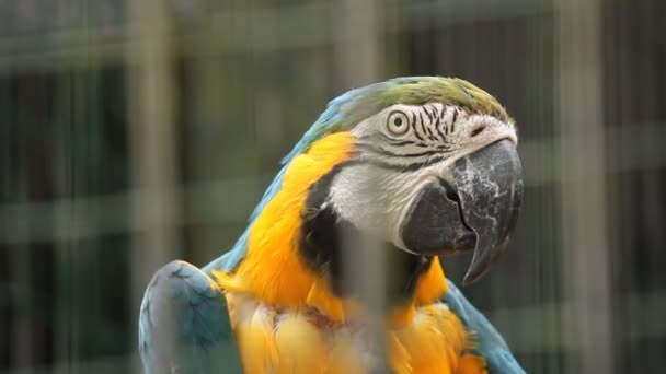 Papoušek ara v zoo Lublaň