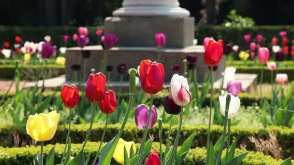 Shot barevné tulipány kvetoucí