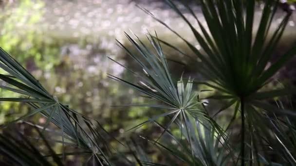 di foglie di palma bella da vicino