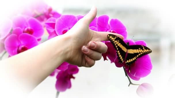 Kézi próbál tro érint egy szép pillangó