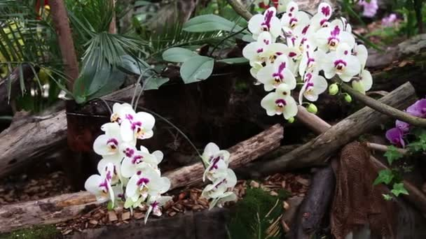 Orchids blossom