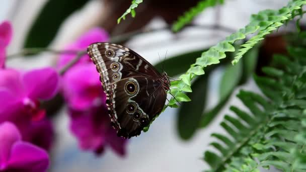 Nő megérintette a pillangó