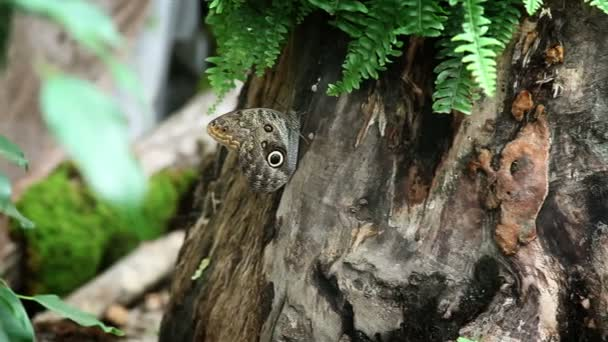 Nice brown butterfly on a tree