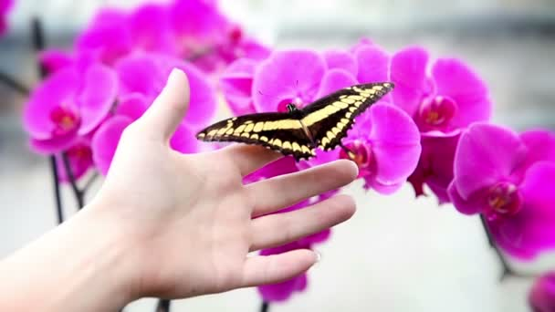 A nice black and yellow butterfly on an anonymous hand