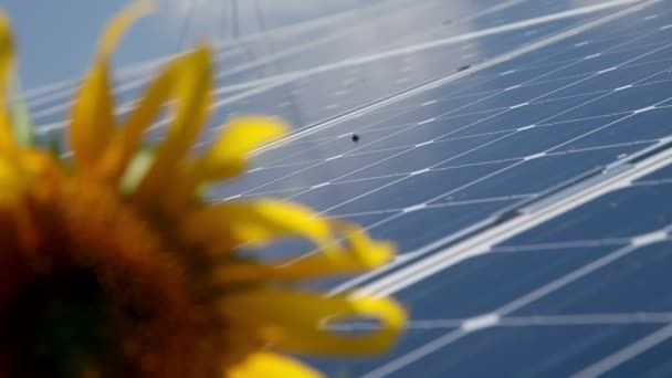 Beautiful sunflower and solar power station