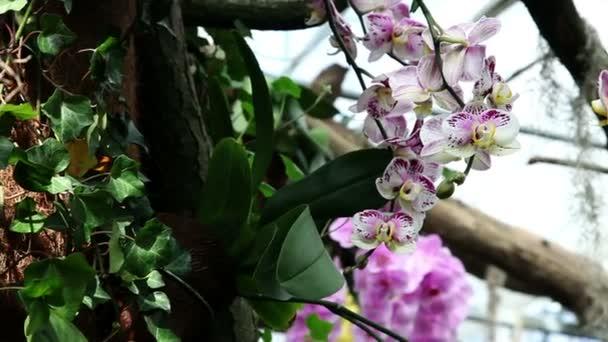krásné orchideje v přirozeném prostředí
