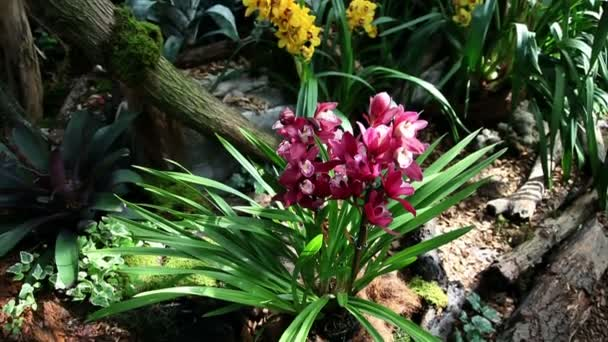krásná orchidej roste a kvete v přirozeném prostředí