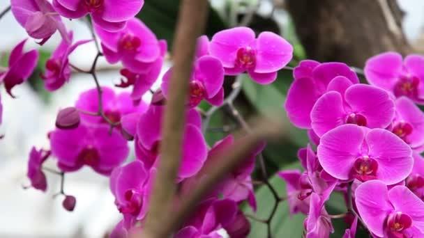 Krásné orchideje květ