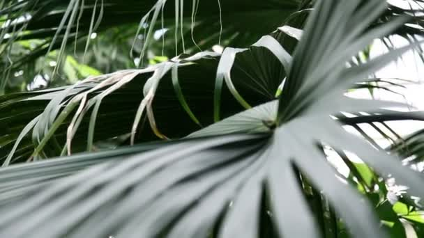 Beautiful green leaf of a tropical palm tree