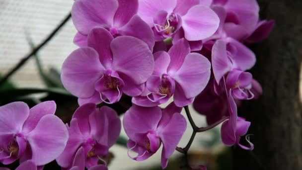 Close up of a beautiful orchids blossom