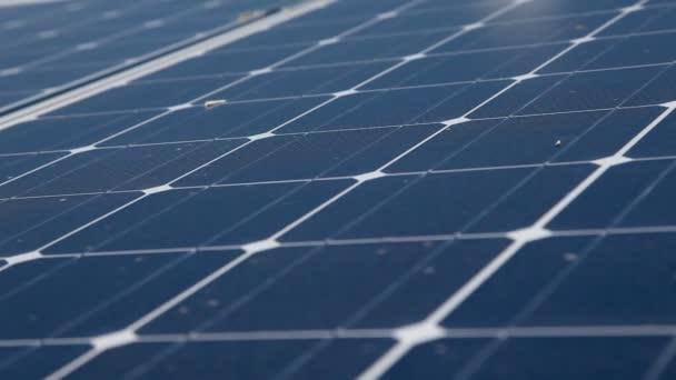 slunečnice a solární panely