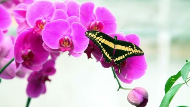 Szép fekete és sárga pillangó egy növény