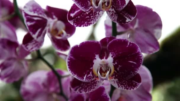 Detail květu krásné fialové orchideje