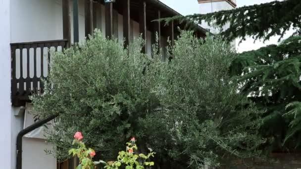 záběr na zahradě před domem