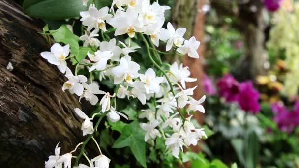 shot skupiny bílé a fialové orchideje