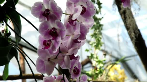 Beautiful orchids blossom