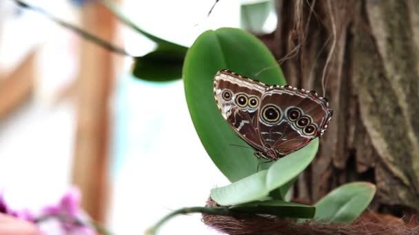 Névtelen kézzel próbálja tro érint egy szép barna pillangó
