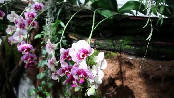 krásné kvetoucí orchideje v lese