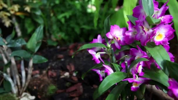 Beautiful violet orchids blossom