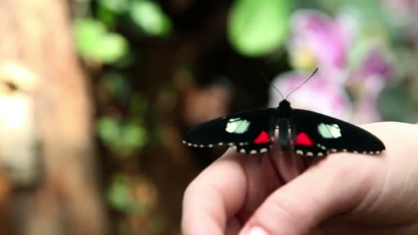 Small beautiful and colorful butterfly on womans hand
