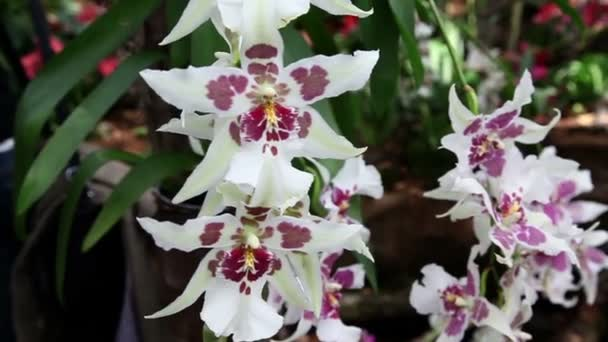Violet and white orchids blossom in garden