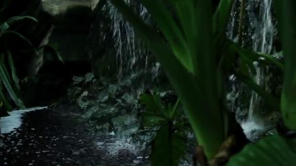 džungle rostliny