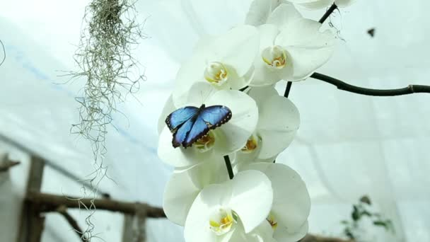 Blue butterfly on a beautiful orchids