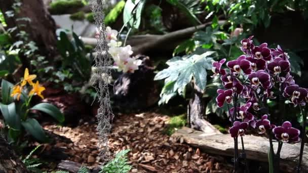 Beautiful orchids blooming