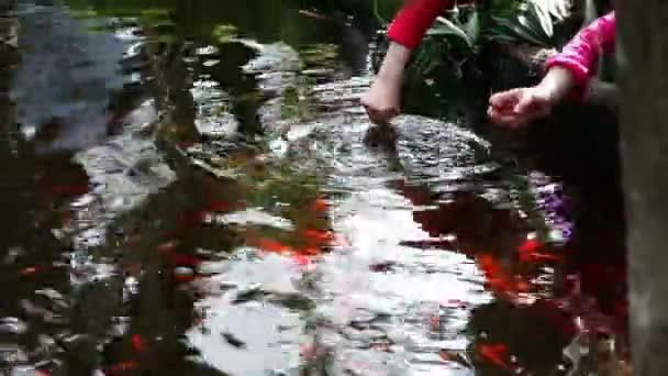 zlaté ryby v nádrži v zahradě