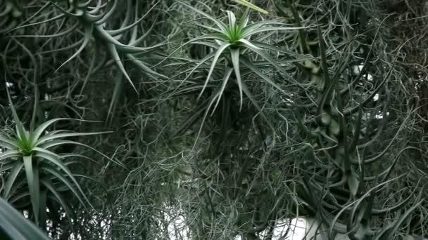 několik tropické rostliny rostou společně v botanické zahradě