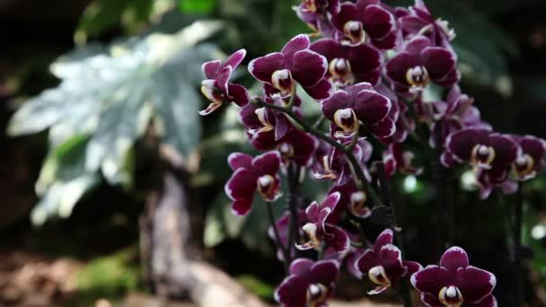 Orchids blossom in beautiful garden