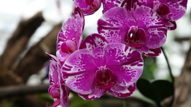 Close up of a violet orchids blossom