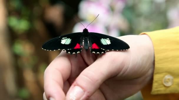 Close up of a beautiful and colorful butterfly on womans hand
