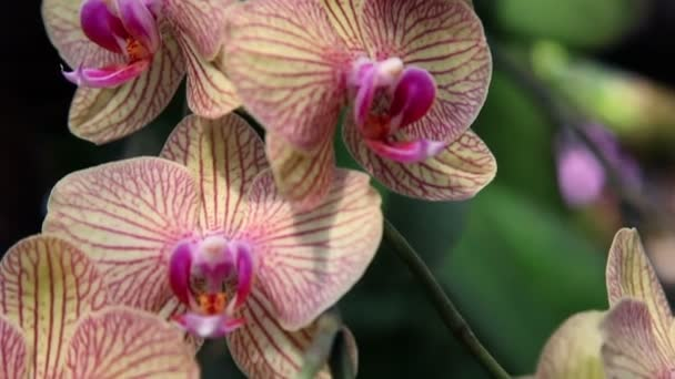 Close up and down pan shot of a nice exotic orchid