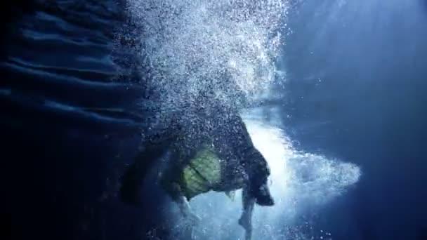 Žena, plavání pod vodou