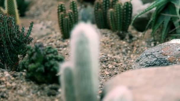 Bližší pohled na zvláštní kaktusy s dlouhou ostny