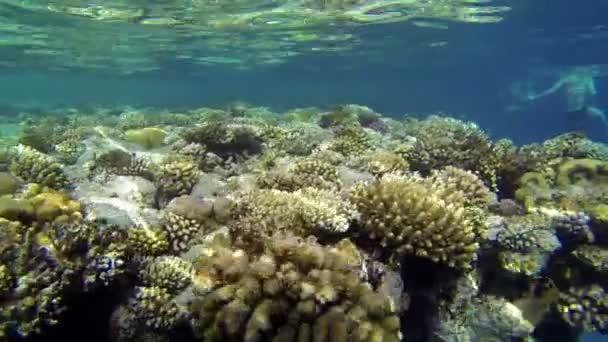 wunderschöne Korallen unter Wasser mit schwimmenden Menschen
