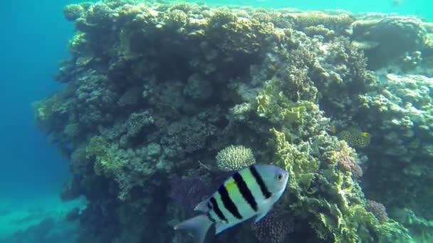 Fische schwimmen um Korallen und Menschen herum in Richtung
