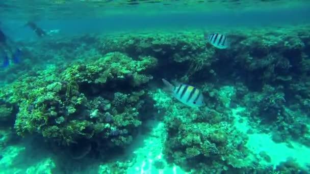 dvě ryby, které běží od skupiny lidí v moři