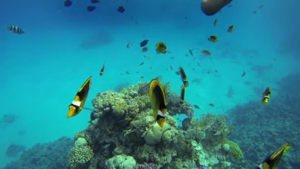 lidé mezi ryby