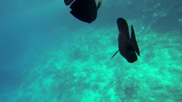 Fishes swimming around the camera