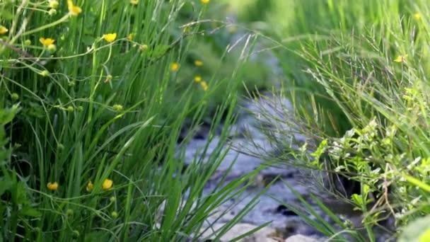 zaměření z trávy do proudu vody
