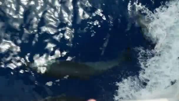 bateau à voile sur les dauphins