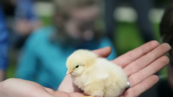 Kids petting small chickens
