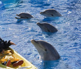 boldog delfin