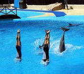 Attrakció a delfinekkel